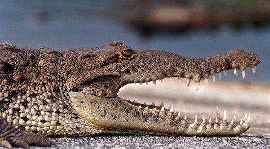 Аллигатор столкнулся ссамолётом ваэропорту вОрландо