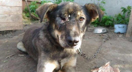 Живодеры жестоко издевались над собакой в Костанае