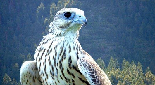Редких птиц на полмиллиона долларов ввезли в Казахстан участники ОПГ