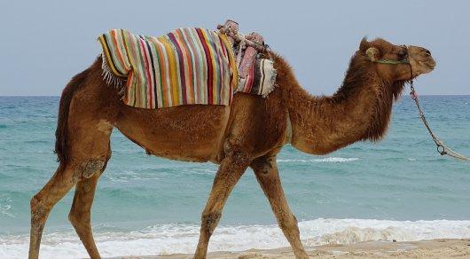 В Кыргызстане родители лечили онкобольного ребенка мочой верблюда у знахарей