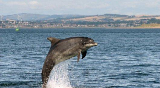 Мертвого дельфина с привязанным куском бетона выбросило на берег в Крыму