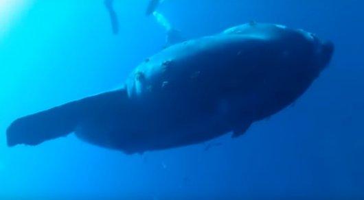 Австралийская студентка обнаружила самую тяжелую в мире рыбу