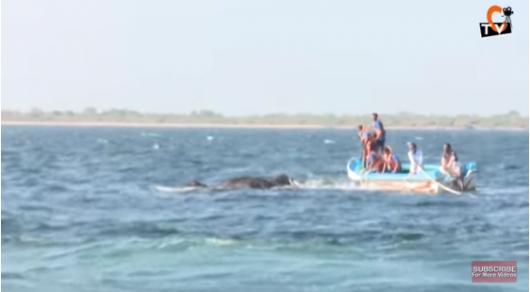 На Шри-Ланке спасли двух слонов, унесенных в открытое море
