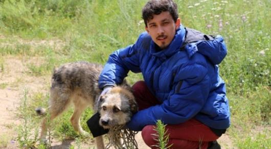 Жители Костаная три дня кормили пса, чтобы вытащить из двухметровой ямы