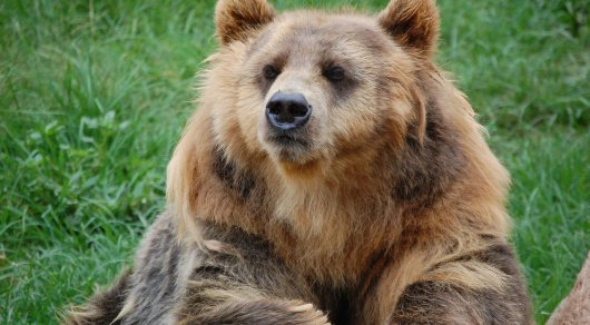 Пожилой японец отбился от медведя приемами карате