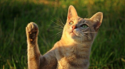 Пользователи Сети решают новую головоломку с котами