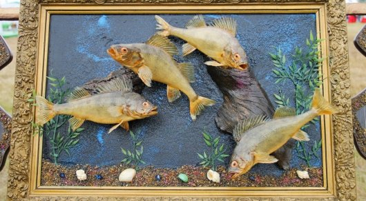 Необычные картины из пойманных рыб делает художник из Павлодарской области