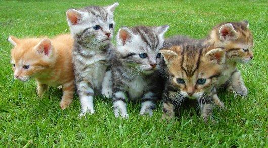 В Усть-Каменогорске коробка с котятами стала причиной транспортного коллапса