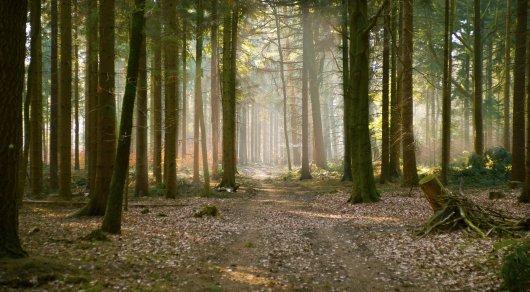 В лесопосадке возле Астаны нашли скелет человека