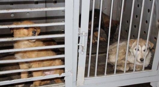Как будет выглядеть приют для бездомных животных с зоопарком в Астане