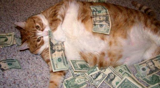 Американка оставила котам наследство в 300 тысяч долларов