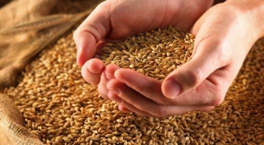 Недостача почти 7 миллионов тонн зерна выявлена в трех областях Казахстана - Генпрокуратура