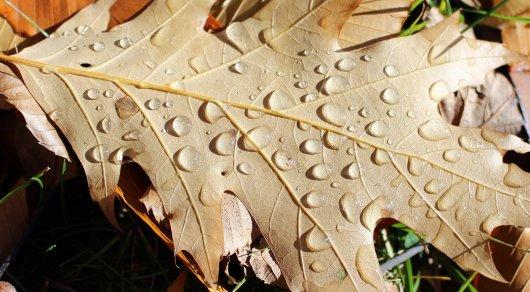 Мокрый снег и грозовые дожди. Каким будет сентябрь в Казахстане