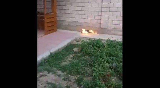 Полиция Караганды ищет живодеров, поджегших кошку