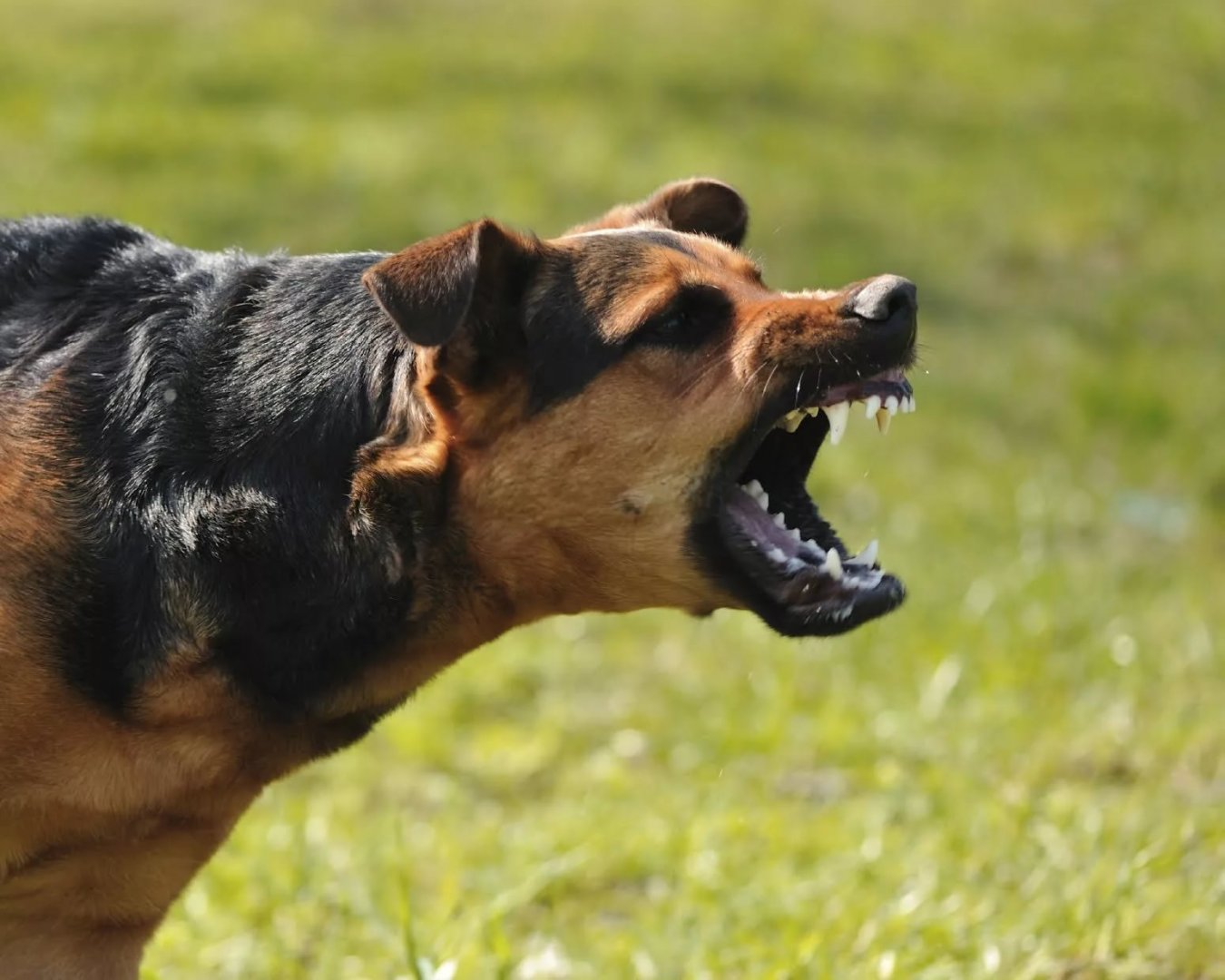 dog with rabies - 1200×630