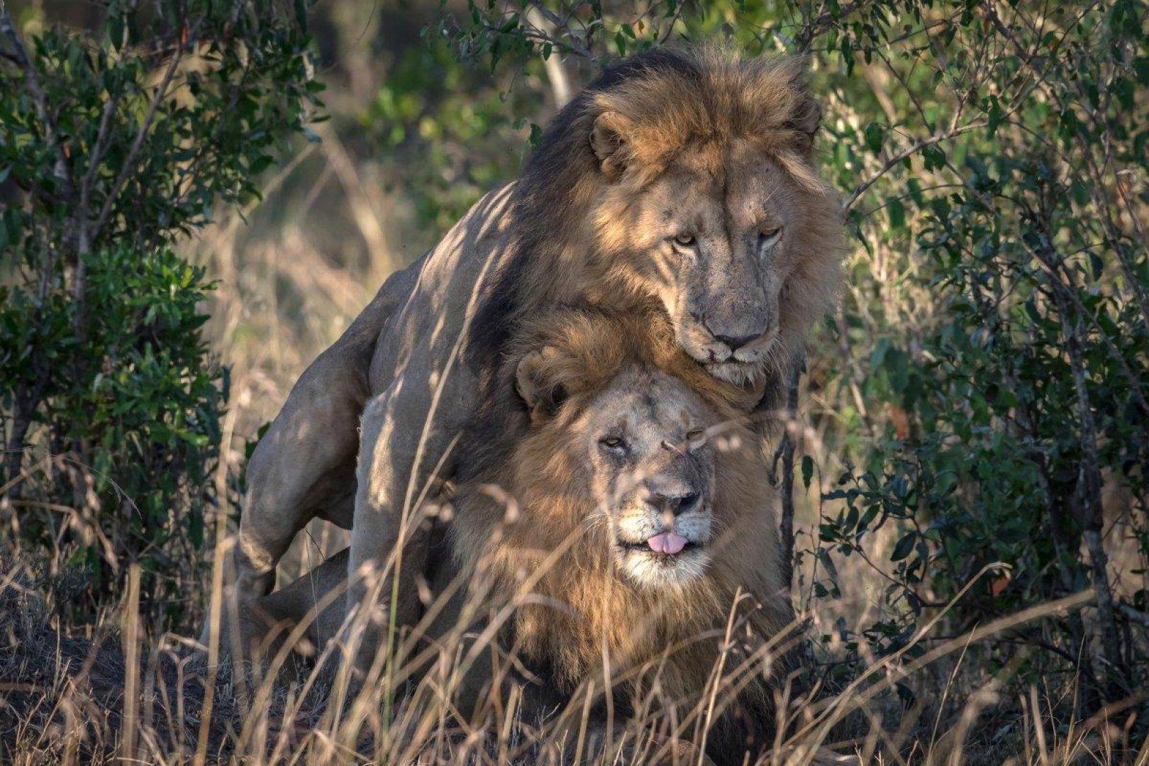 Гей массаж львов