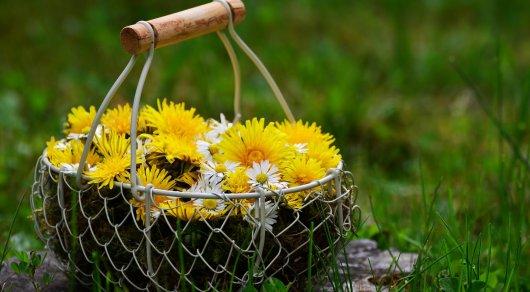 Иллюстративное фото с сайта pixabay.com