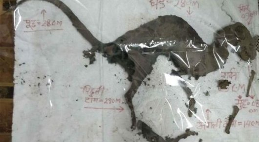 Наюге Индии ученые обнаружили останки динозавра ссохранившейся плотью