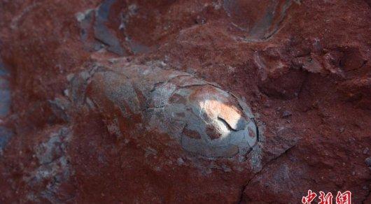 Китайские строители отыскали несколько десятков яиц динозавров— Новогодний подарок палеонтологам