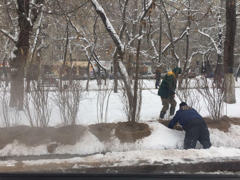 Можно ли сажать деревья зимой прямо в снег? 96