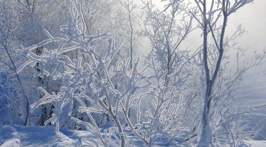 Сколько человек пострадало из-за свирепых морозов вАстане