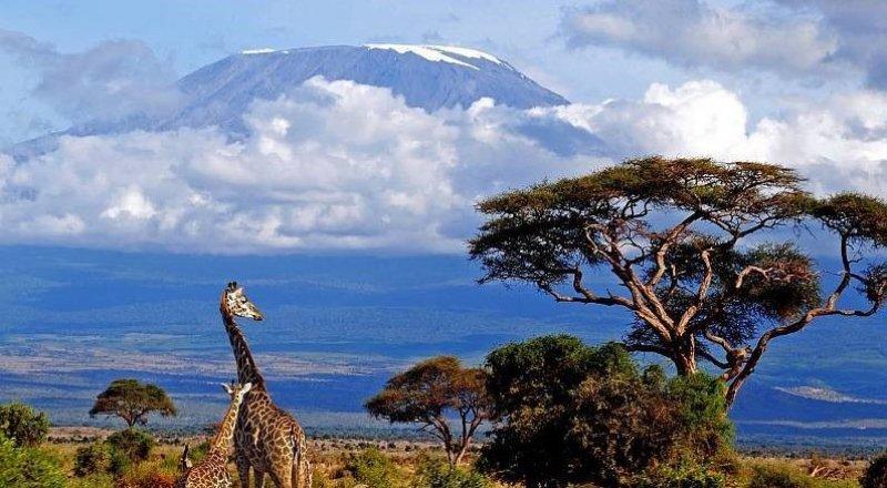 Восхождение на Килиманджаро: с чего начать и сколько это стоит | Tengri  Travel