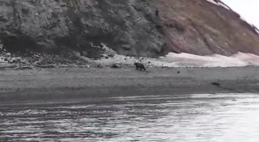 Беги, Серега!: очевидец снял навидео фатальную встречу рыбака смедведем