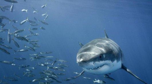 Свидетели  опубликовали видео нападения акулы налюдей