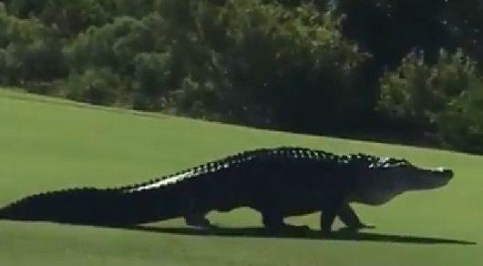 чудовищный аллигатор с американской военной базы попал на