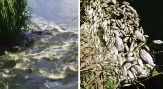 Гибель рыбы в реке Карагандинской области: химикаты обнаружили в воде