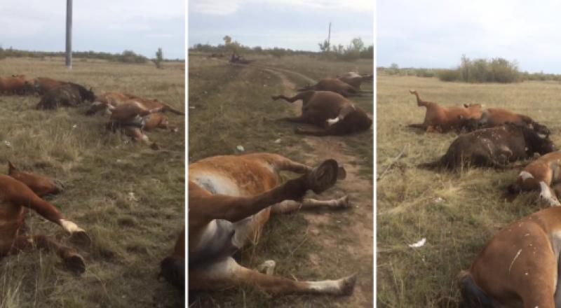 История о гибели лошадей в Нур-Султане получила продолжение