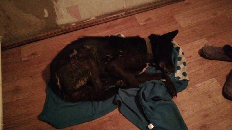 Мужчина жестоко избил соседскую собаку в Карагандинской области