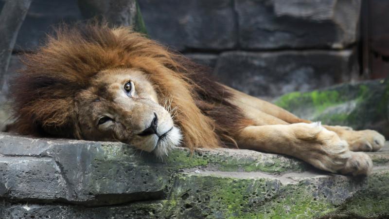 В Караганде установили владельца захороненного в парке льва