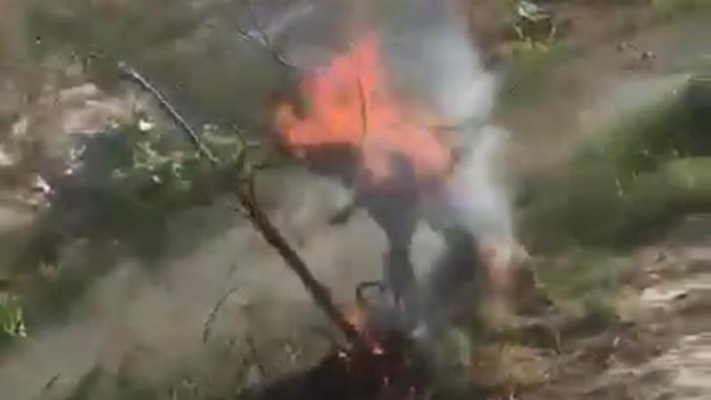 Собаку сожгли заживо: полицейские Павлодара начали проверку