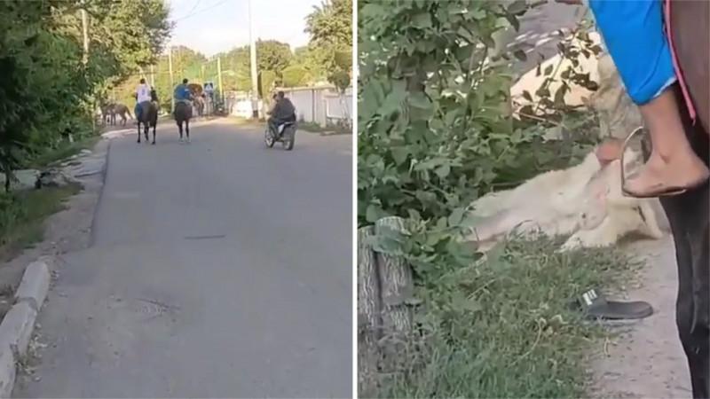 Подростки устроили кокпар с собакой в Алматинской области