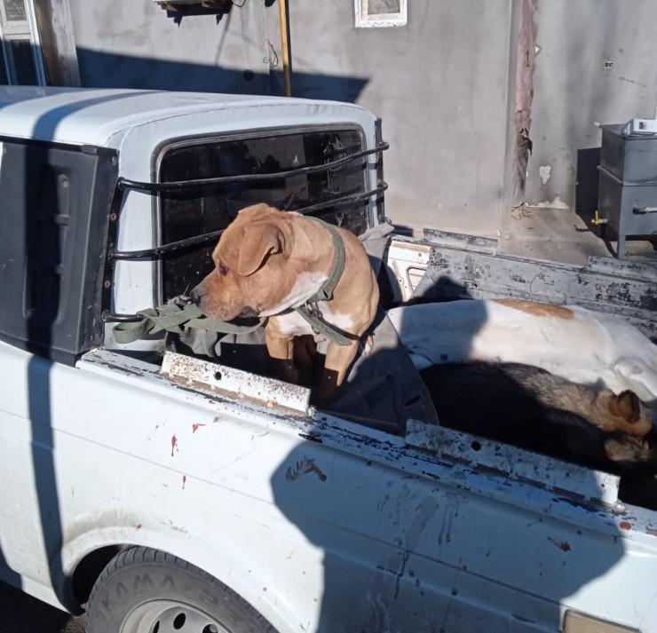 В Атырау собака напала на 2-летнего малыша 2